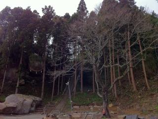 石巻市釣石神社のオオヤマザクラ