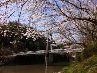 愛媛県内子町中山川の桜