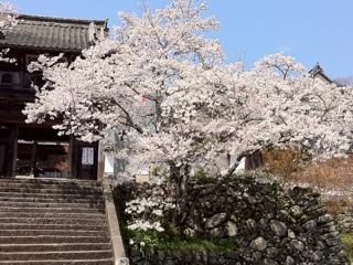 愛媛県内子町高昌寺の桜