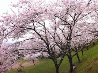 石巻市日和山公園